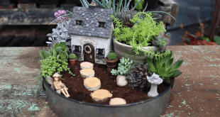 mini jardim de suculenta