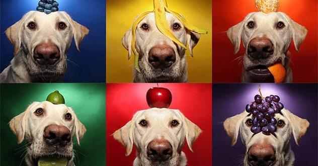 16 alimentos para cães que ajudam a prevenir o câncer