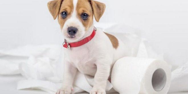 Vermífugo para cachorros: saiba como e quando administrar