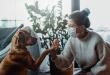 Dicas e cuidados com seu pet na quarentena